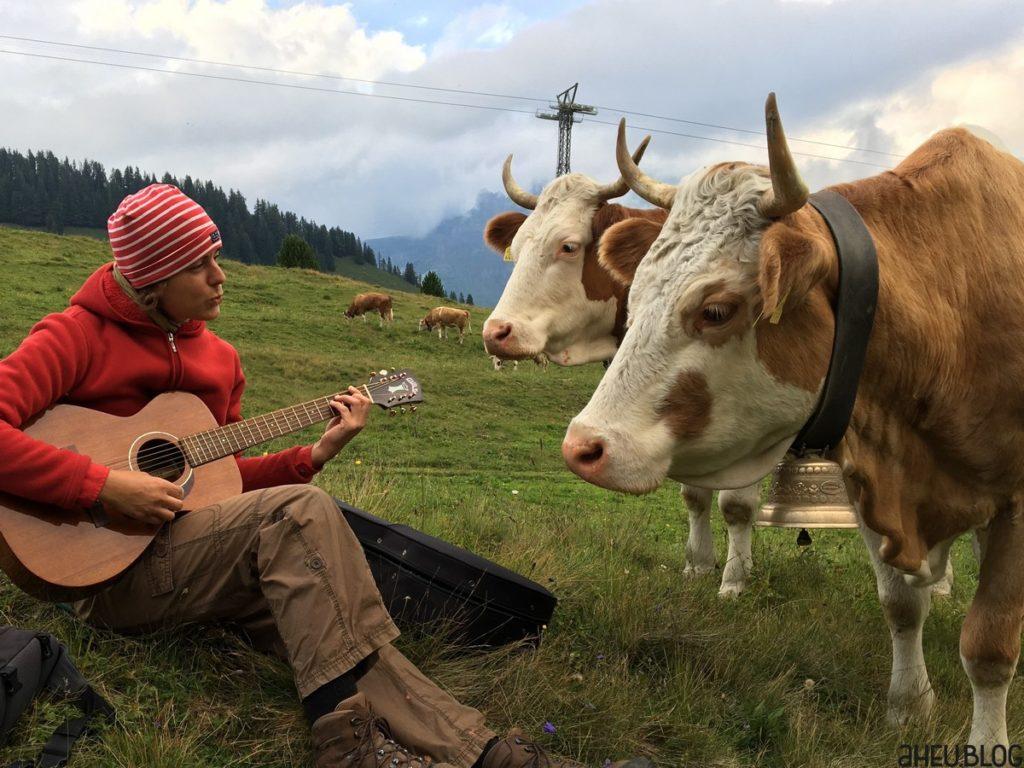 Gitarristin mit Kühen