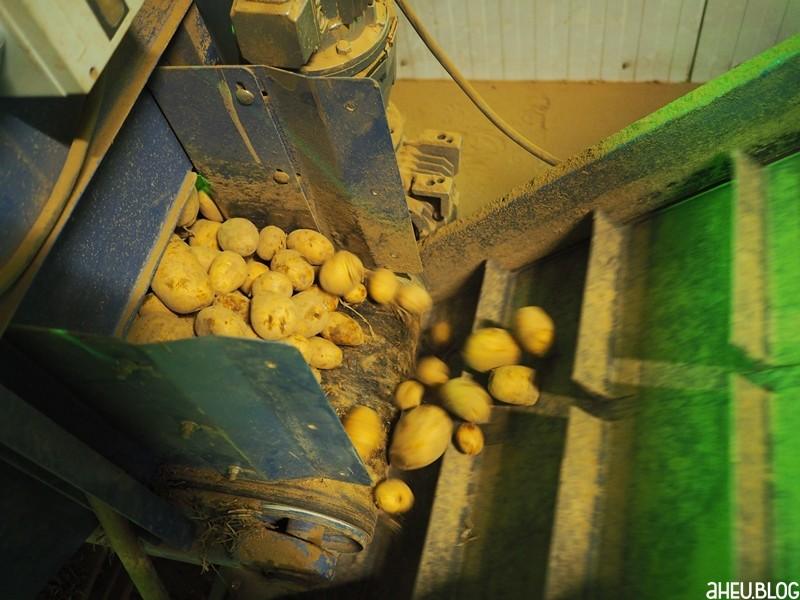 Kartoffelförderband